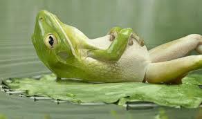 frogbloating